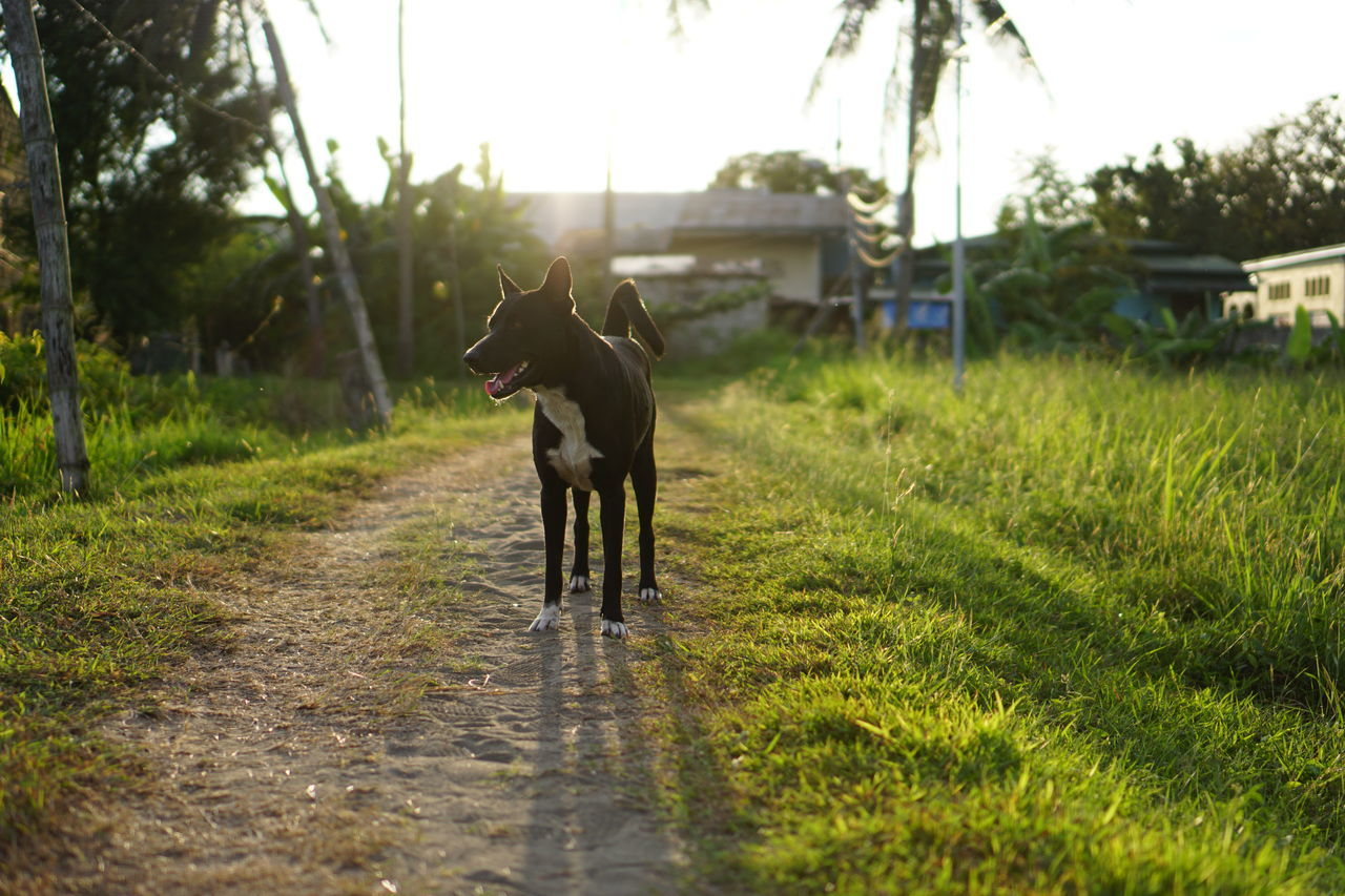 Backlit Photo Of Dog Standing On Path