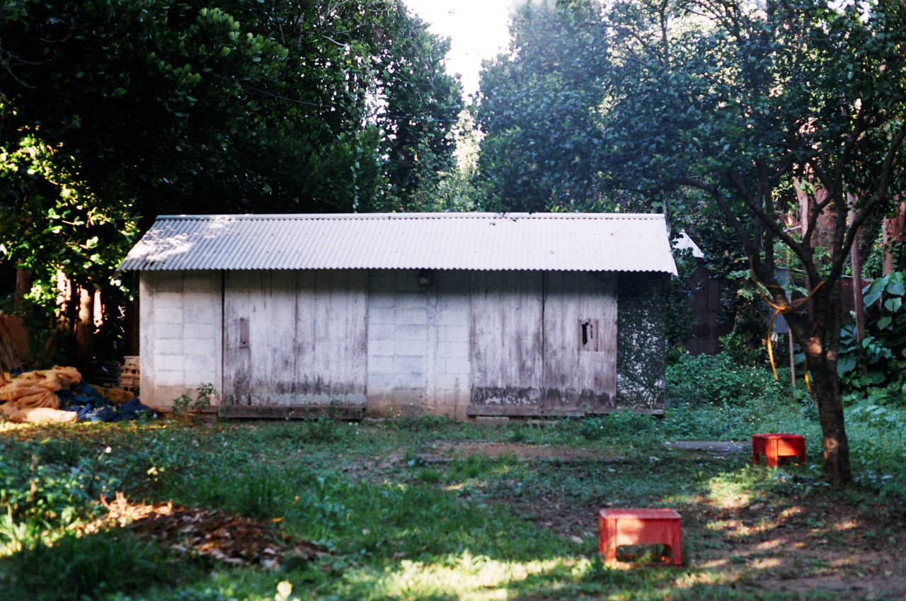 Architecture Back Yard Backyard Building Exterior Built Structure Damaged Day Discarded Growth House Non-urban Scene Obsolete Outdoors Rural Scene Tranquility Tree Weathered