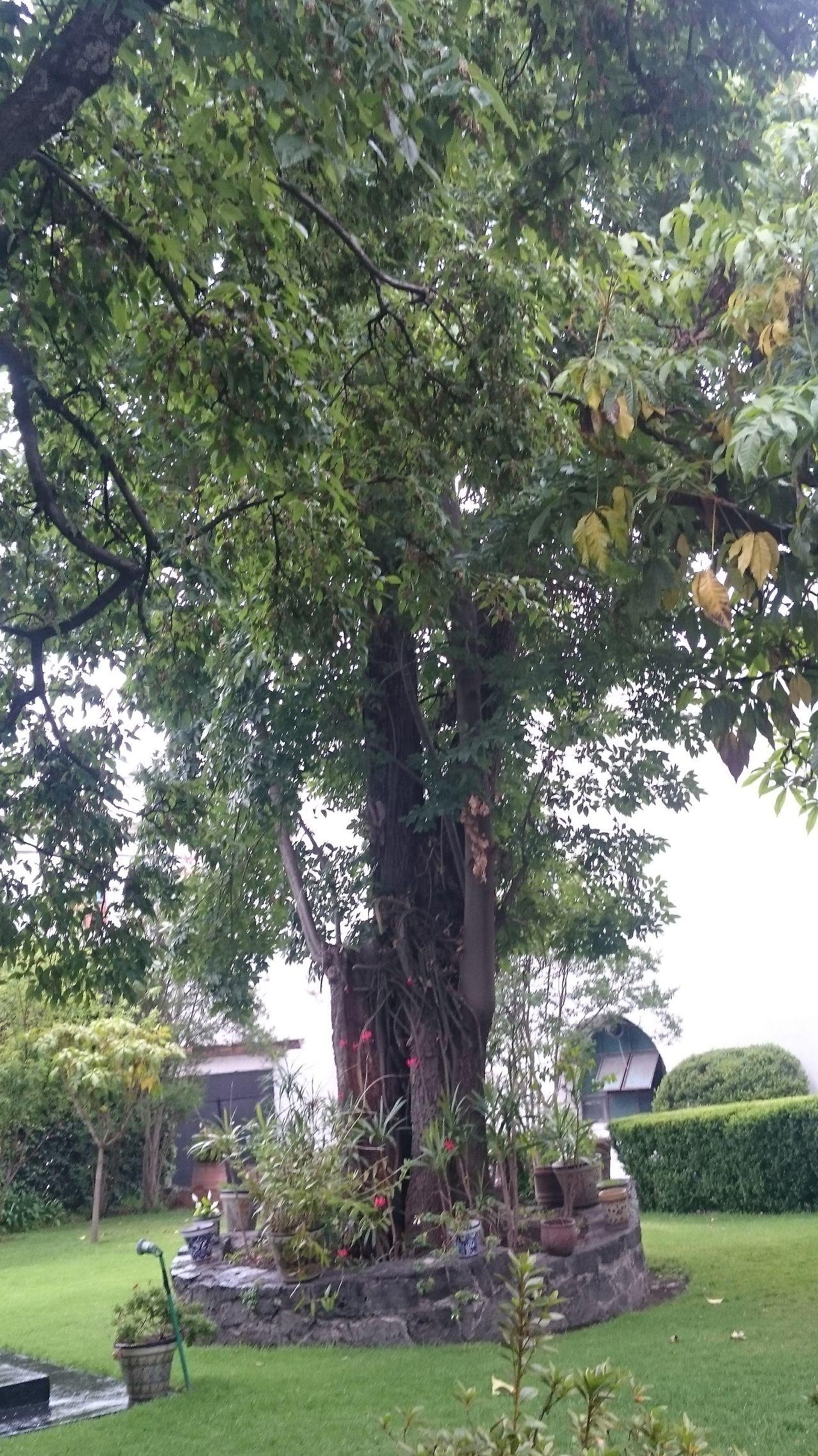 San Angel Casa Del Risco. Cuidad De México Tree Hanging Out Garden Photography