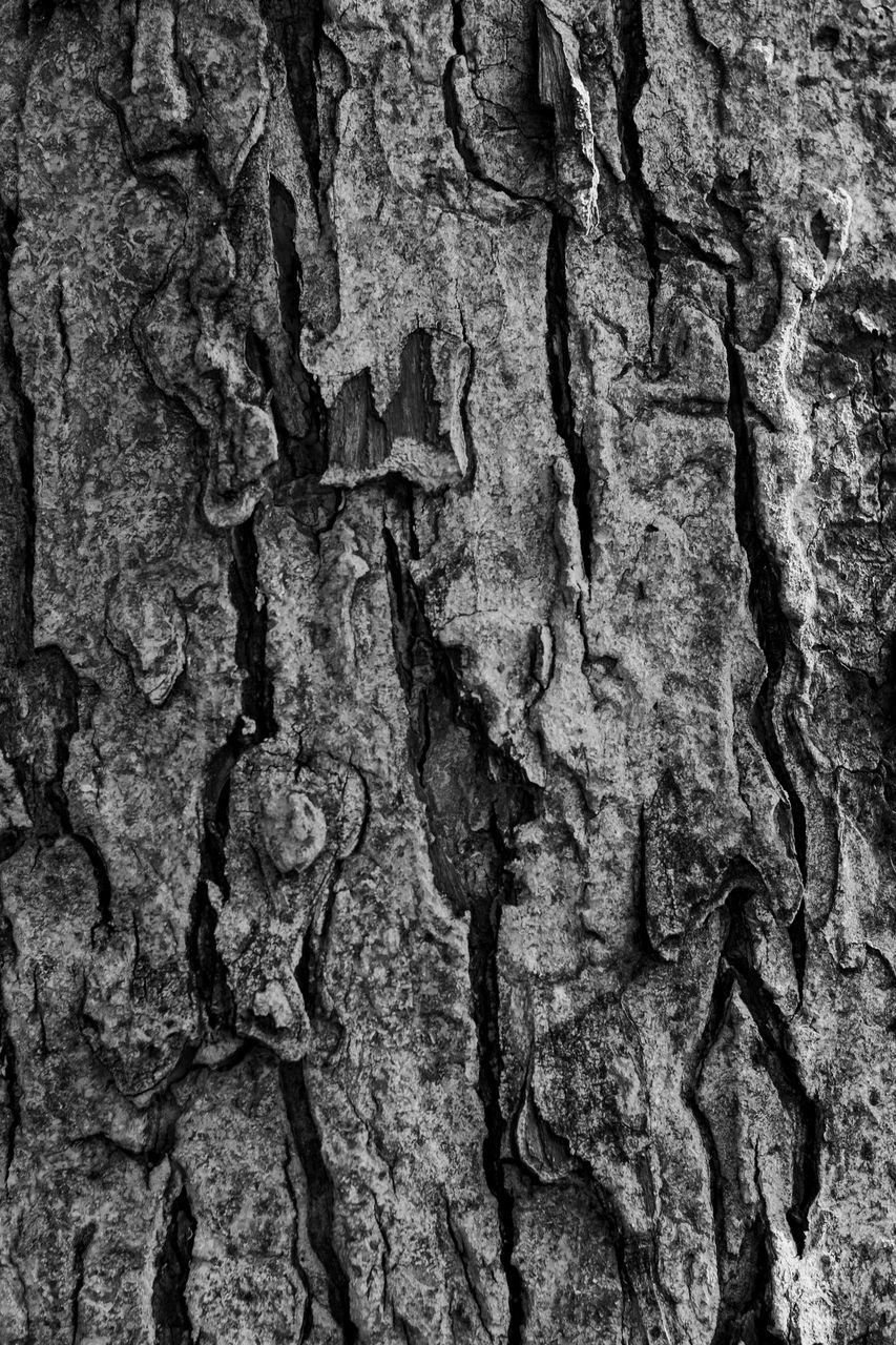 textured, tree trunk, full frame, rough, backgrounds, close-up, no people, bark, pattern, built structure, tree, day, nature, outdoors