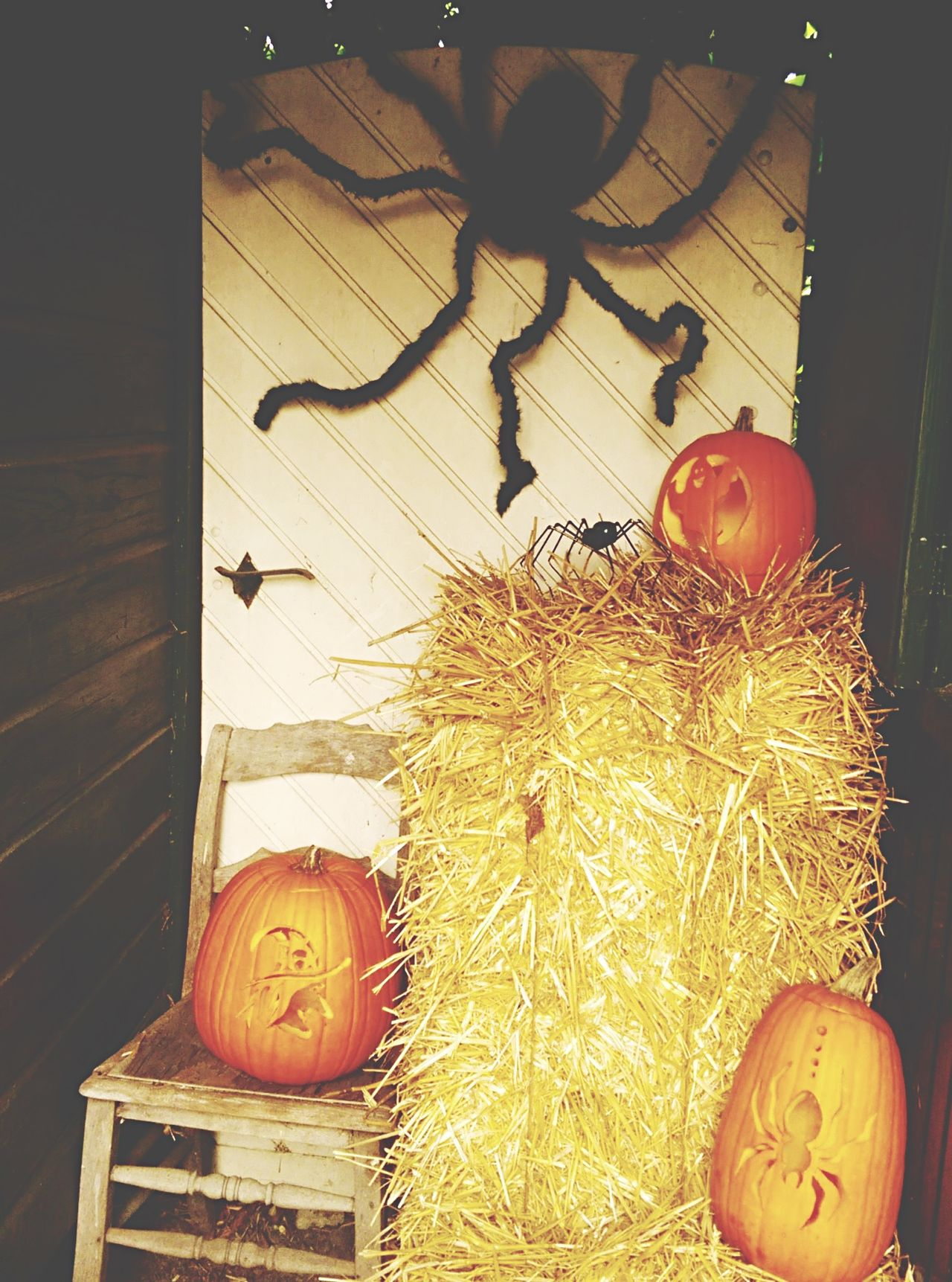 Happy Halloween Pumpkin Spyder Mystic fall Taking Pictures Composition