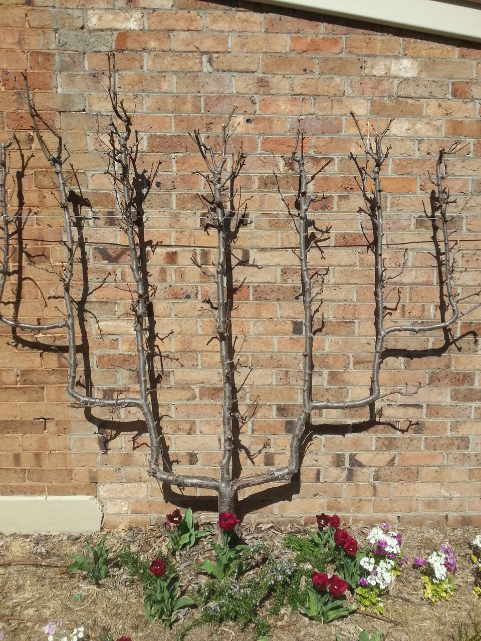 architecture, no people, built structure, brick wall, day, plant, outdoors, building exterior, tree, growth, nature, flower