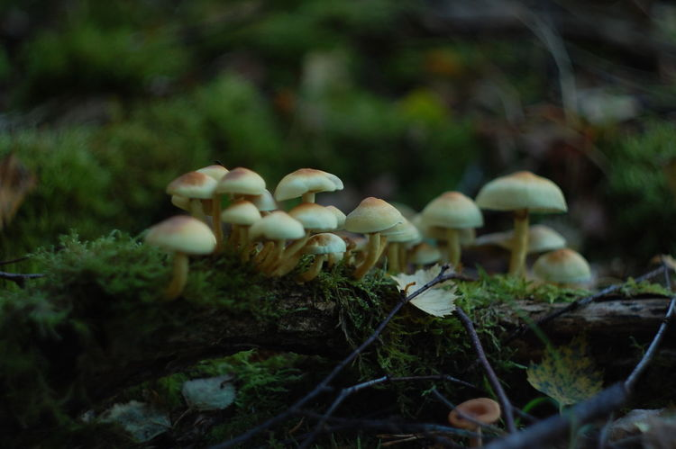Beauty In Nature Botany Close-up Day Depth Of Field Dof Dof Nature Dofaddicts Focus On Foreground Forest Forest Photography Fragility Fungus Green Color Growing Growth Moss Mushroom Nature No People Non-urban Scene Selective Focus Toadstool Tranquility Wilderness