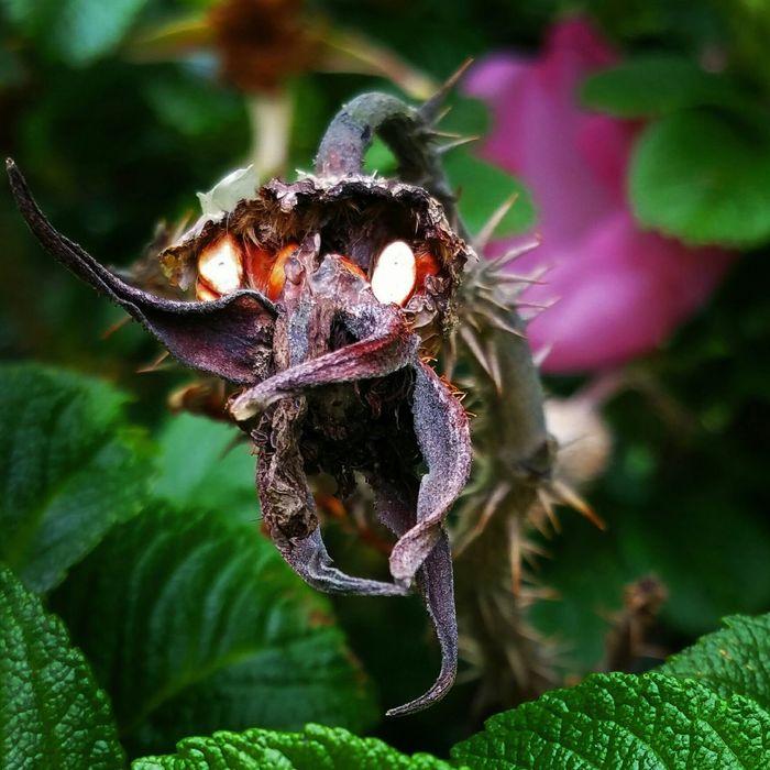 Deadflower EvilFlowers Evildead Macroclique Eyem Best Shots Flower Flowers EyeEm Best Shots - Nature