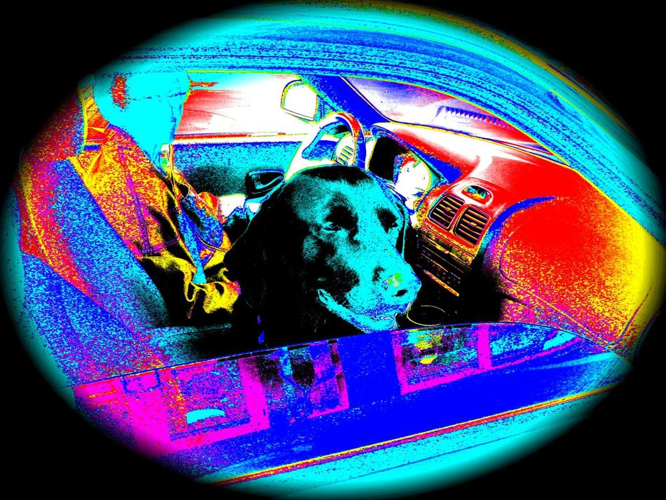 Beauty In Nature Bonding Dog Doglover Human Animal Relationship Pastel Blue Psychedelic Psychedelicart Round