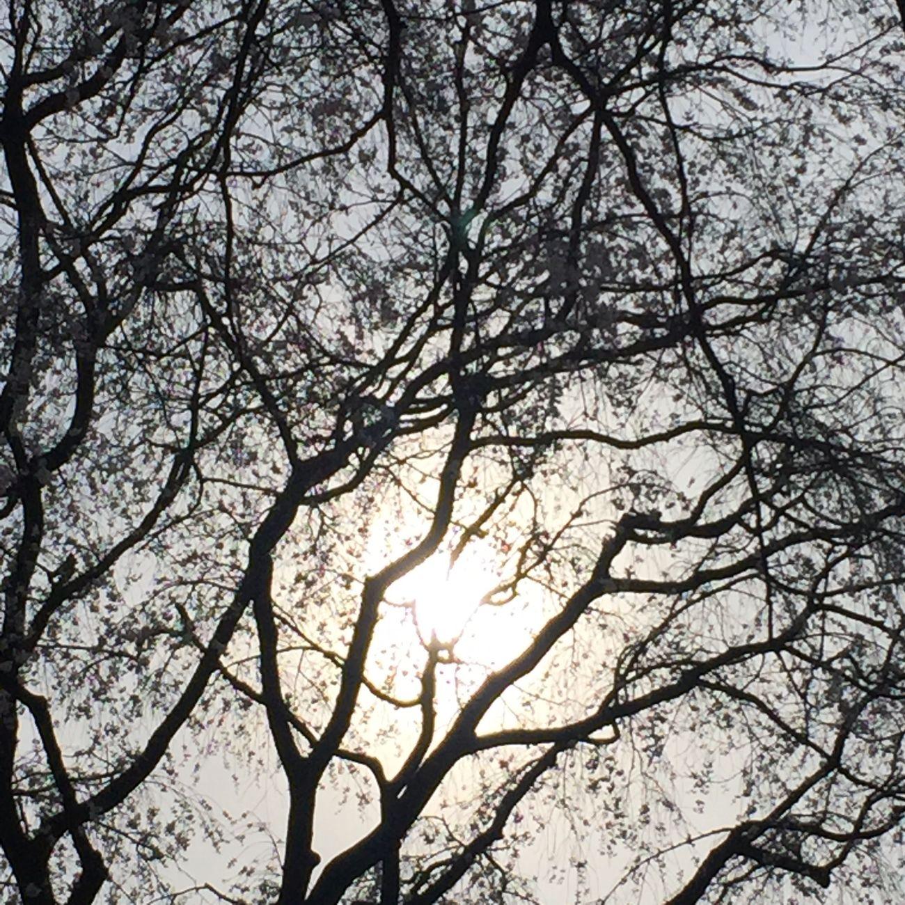 Tokyo Days Nature Sky