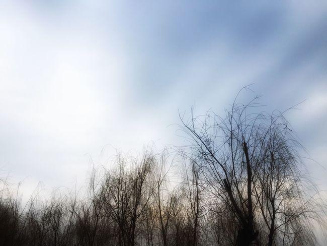 Urban Spring Fever Walking Around Hugging A Tree Enjoying The Sun Jogging Relaxing