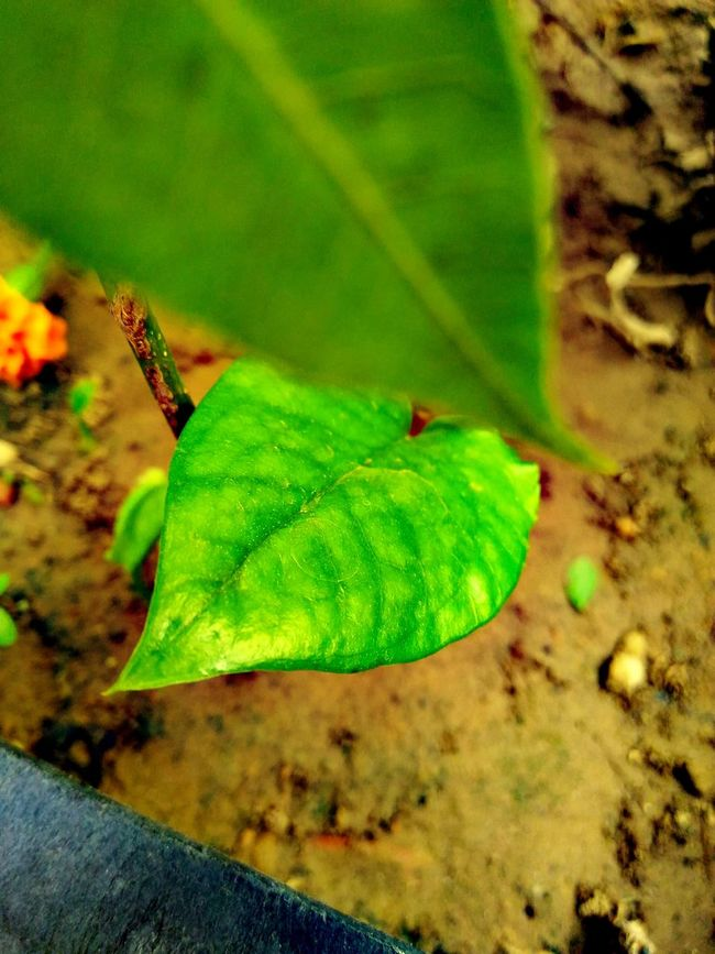 Green Leaves Tell Everything :) Plz Plant Trees And Make Our World Beautiful ♥ Things I Like Awesome_nature_shots Hello World Showcase April Showcase: April 2016 Showcase: April Showcase:april Ngma Photographer Awesome_view