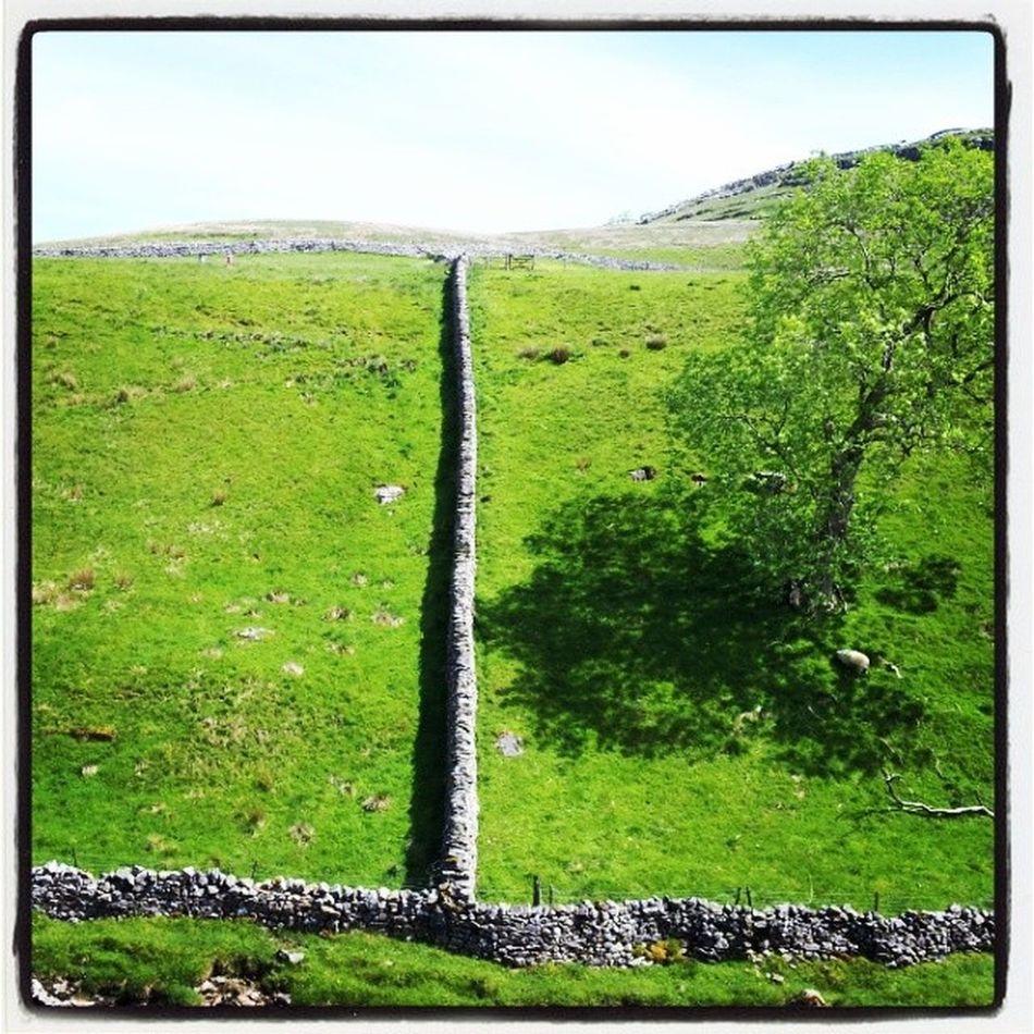 Drystone walls Yorkshiredales Ingletonfalls Ingleton