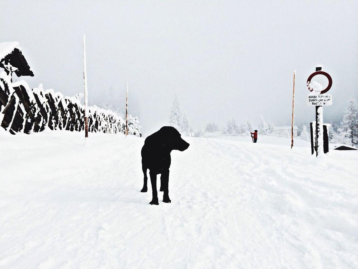 Wagrain, Austria Winter Dog