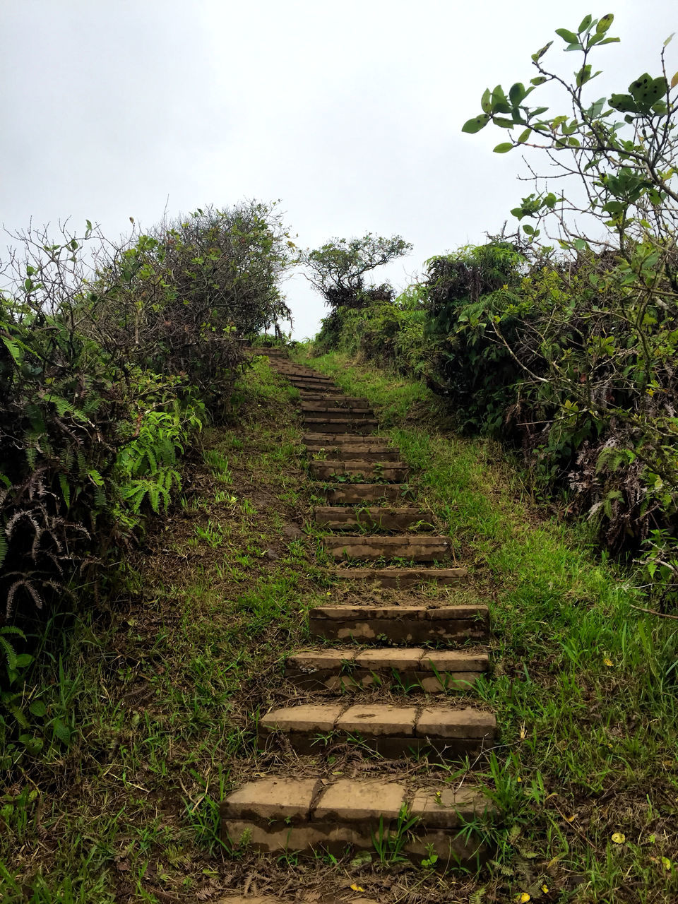 steps, steps and staircases, tree, staircase, growth, nature, no people, day, tranquil scene, outdoors, plant, beauty in nature, sky, scenics