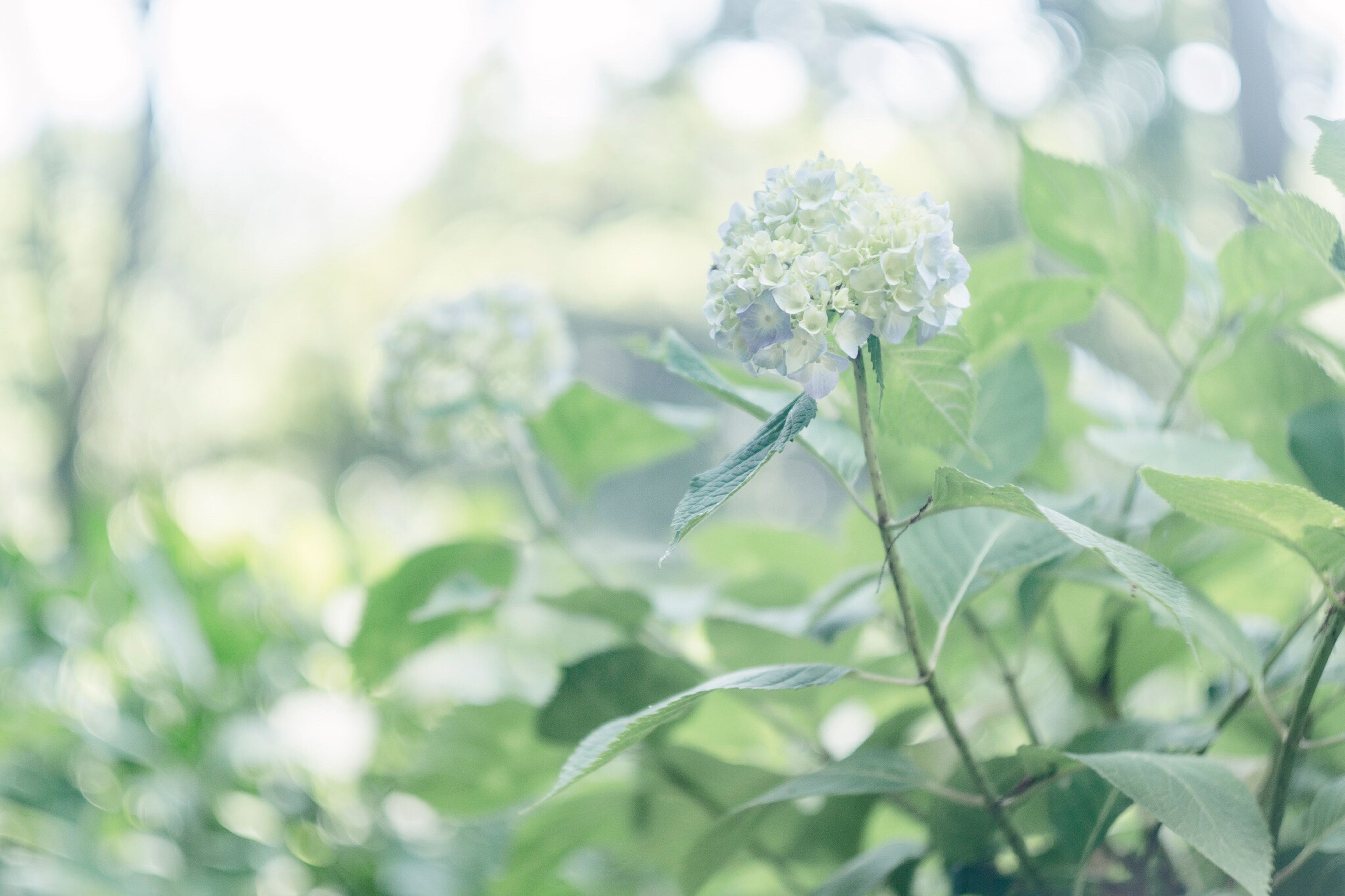 flower, nature, beauty in nature, plant, growth, no people, fragility, day, focus on foreground, petal, close-up, outdoors, leaf, green color, freshness, blooming, flower head, animal themes