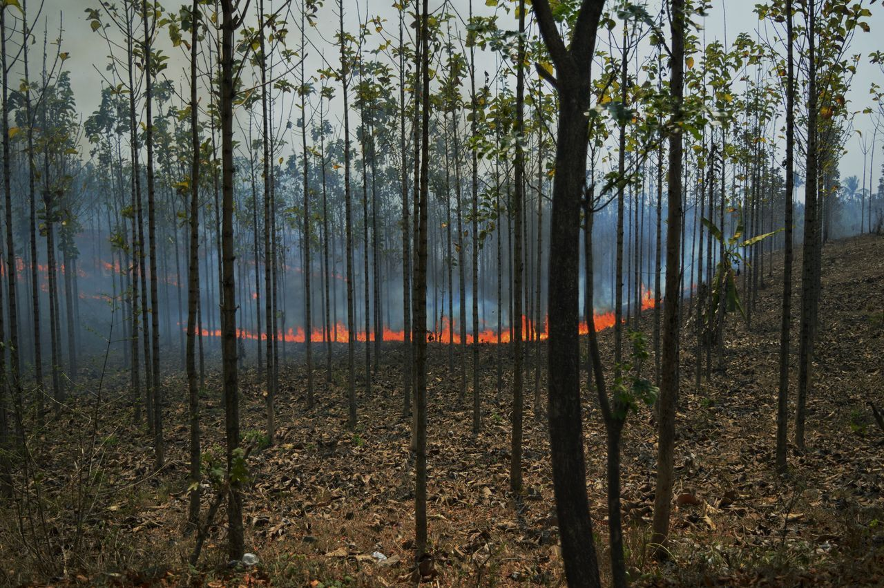 Impact from Illegal burning. near my hometown. Sukabumi Westjava Capture The Moment Captured Moment Capturing Moments  Forest In The Forest Journalism The Photojournalist - 2015 EyeEm Awards Streetphotography My Best Photo 2015