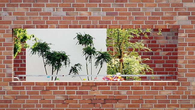 Brick Wall Built Structure Growth Architecture Wall Wall - Building Feature Plant Green Color Close-up Vibrant Color Building Exterior Branch Day Growing Pot Plant Outdoors Green No People Rooftop Garden Green Green Green!  Window Frame Brickporn
