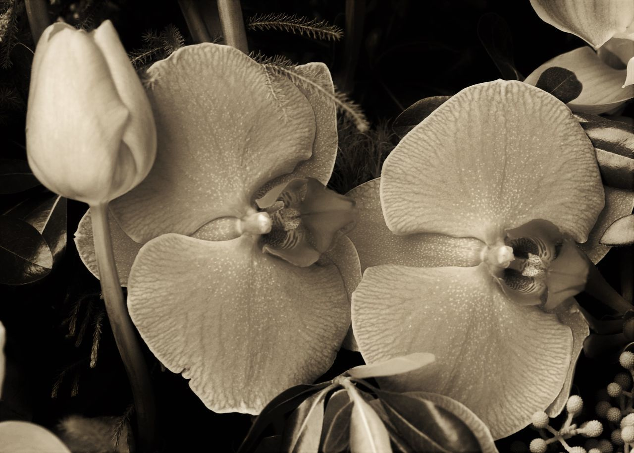 Beauty In Nature Black And White Black And White Flowers Black And White Plants Closeup Flower Porn Flowers Nature Nature Photography Plants And Flowers