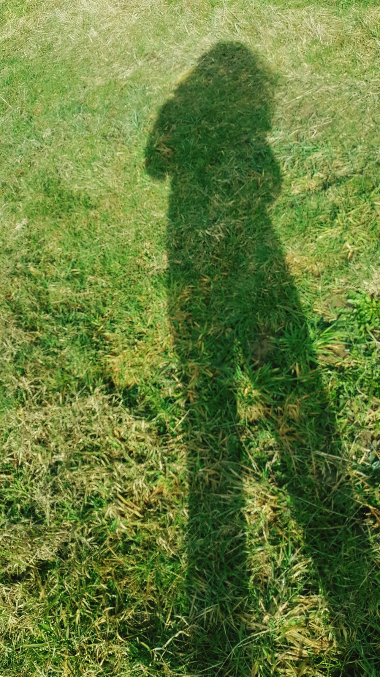 Projection Green Color Shadow Grass Nature Day Outdoors Silhouette Promenade Light And Shadow Lifestyle Moments Of Life Silence Projection Portrait No People Selfy