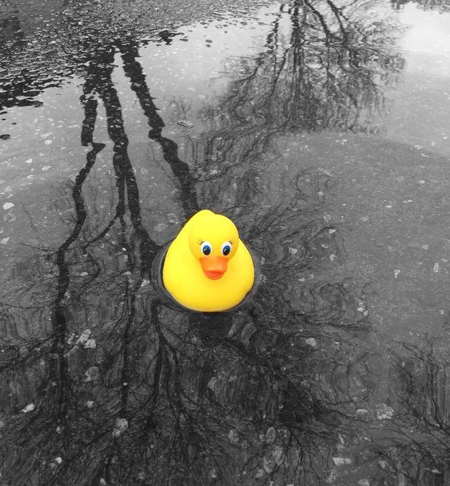 Rubber Duck Puddle Puddleography Puddle Reflections Rainy Days Potholes Pothography Playing In The Water Playing In The Rain. Black And White Collection