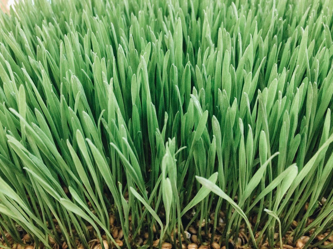 weed grass Foodporn StillLifePhotography Stillphotography Grass Green