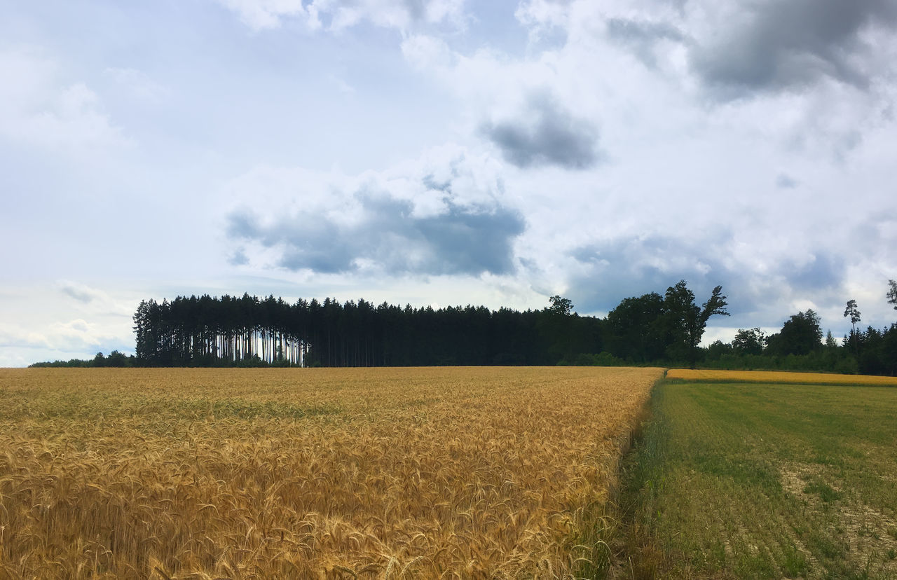 Drei Felder und Wald Agriculture Beauty In Nature Cloud - Sky Day Field Growth Landscape Nature No People Outdoors Rural Scene Scenics Sky Tranquil Scene Tranquility Tree