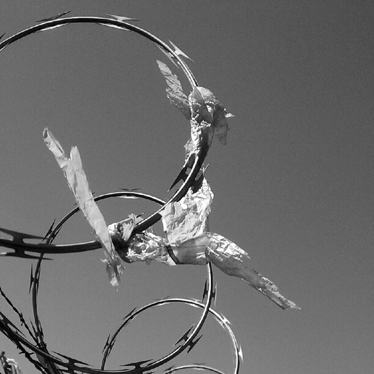 Waiving the white flag Sky LiveanddirectfromLosAngeles Black&white Monochrome Fortheloveofblackandwhite Bnw Blackandwhite Razorsharpsky Barbed Wire Razorwire Lookingup