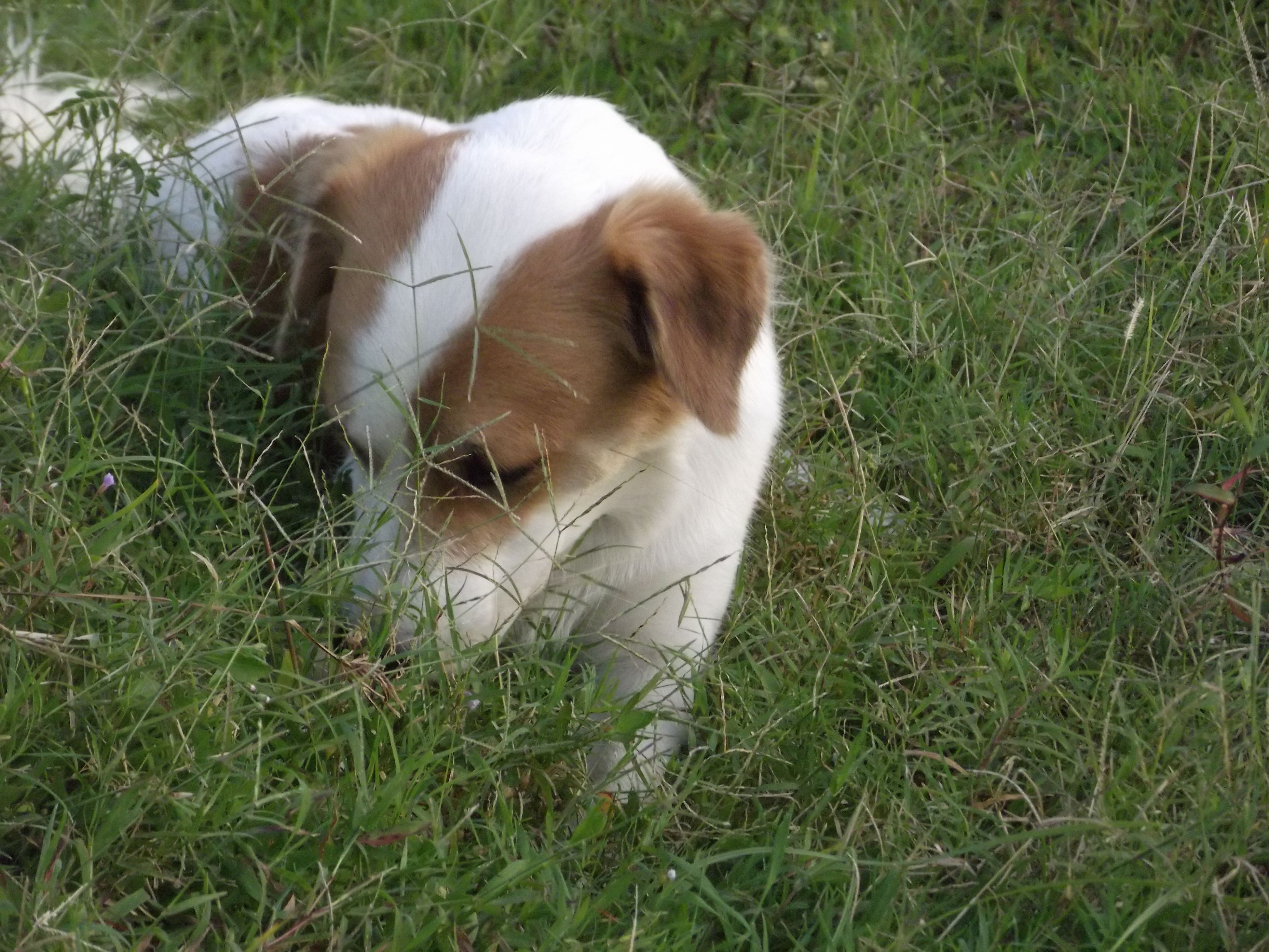 domestic animals, animal themes, grass, mammal, one animal, pets, field, grassy, dog, high angle view, relaxation, livestock, no people, lying down, nature, white color, outdoors, day, resting, green color