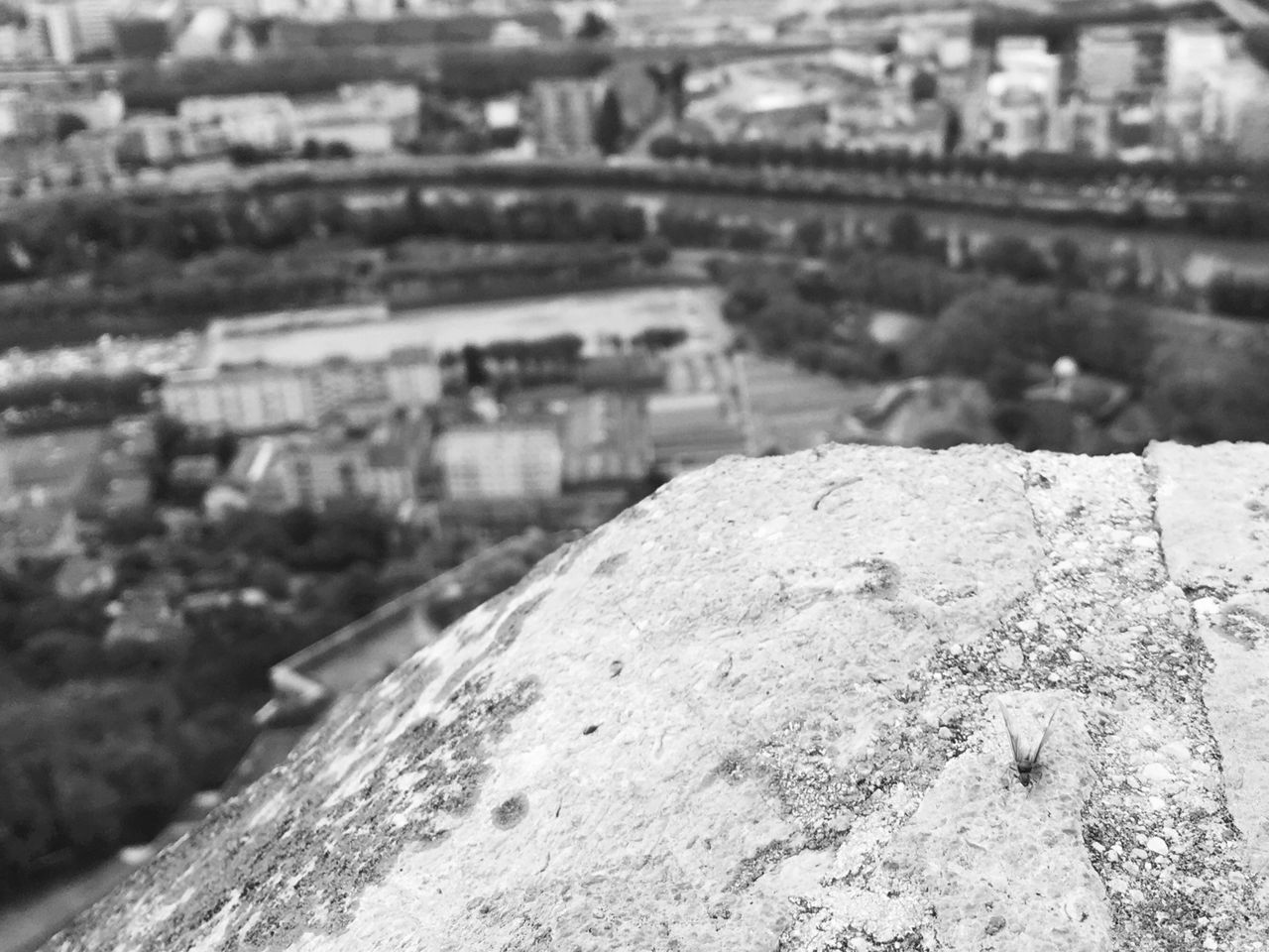 Mountain Urban Blackandwhite Landscape Insect Macro Grenoble Isere  Rhonealpes France Maximum Closeness Light And Shadow