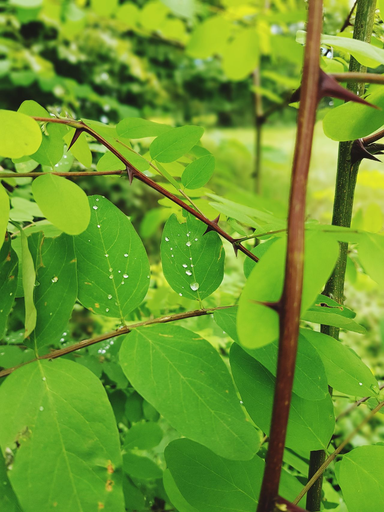 Green Leaf Green Color No People Nature Beauty In Nature Outdoors Rain Droop On Leaf Close-up Beauty In Nature