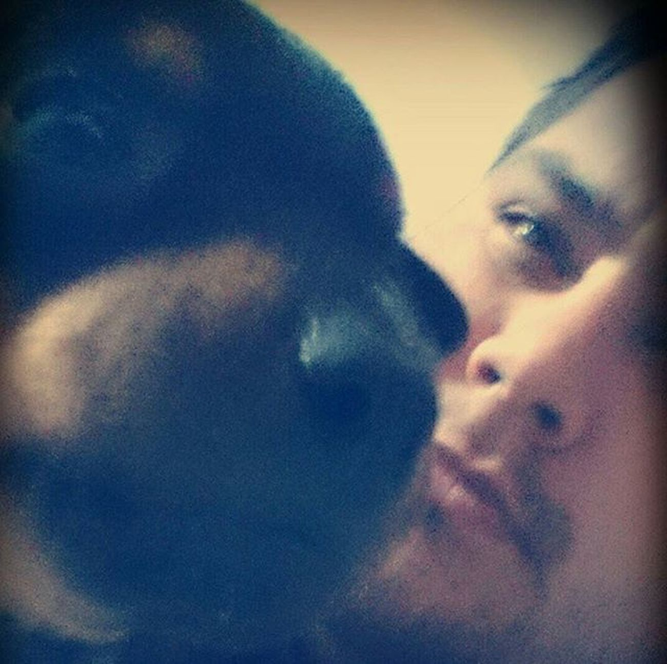 Absolut Malena... Fotografia Selfie Pinscher Dobermampinscher Perro Mascota Animales Chic Malėna Yo FotoDelDia 😚 😚 Aburrido Formosa CmteFontana 😚 😚 Momentos Miradas Pasandoelrato Comandantefontana Formoseño Formoseñeando pueblo minipinscher