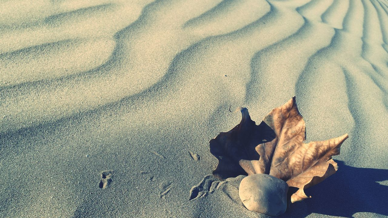 Beach Sand Leaf Lost Dunes Beach Dunes Shadows Shades Stone Nature Samsung Galaxy S4 Textures Nature Textures EyeEm Best Shots Pattern Pieces