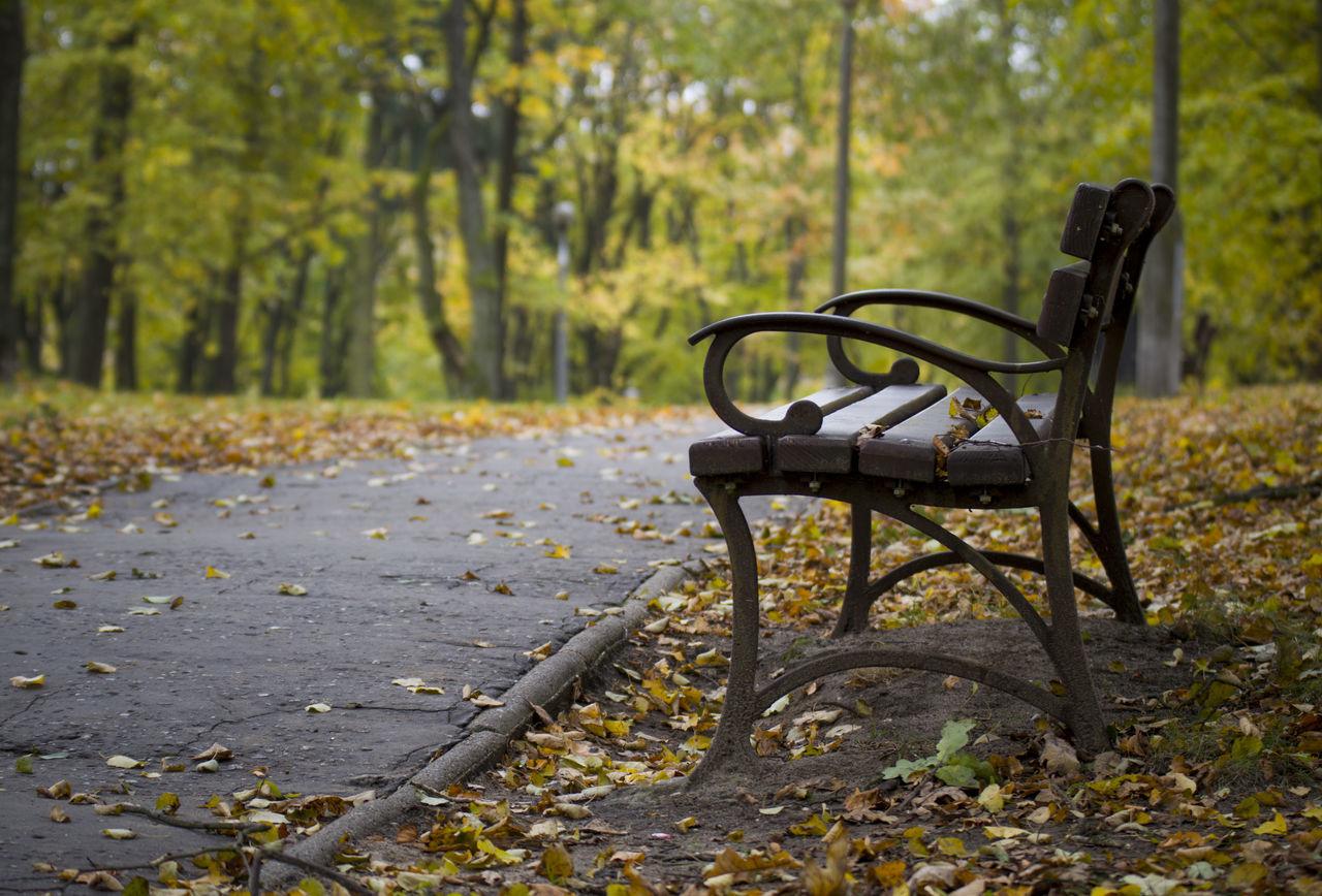 Autumn Jesień Nature Park Tree ławka