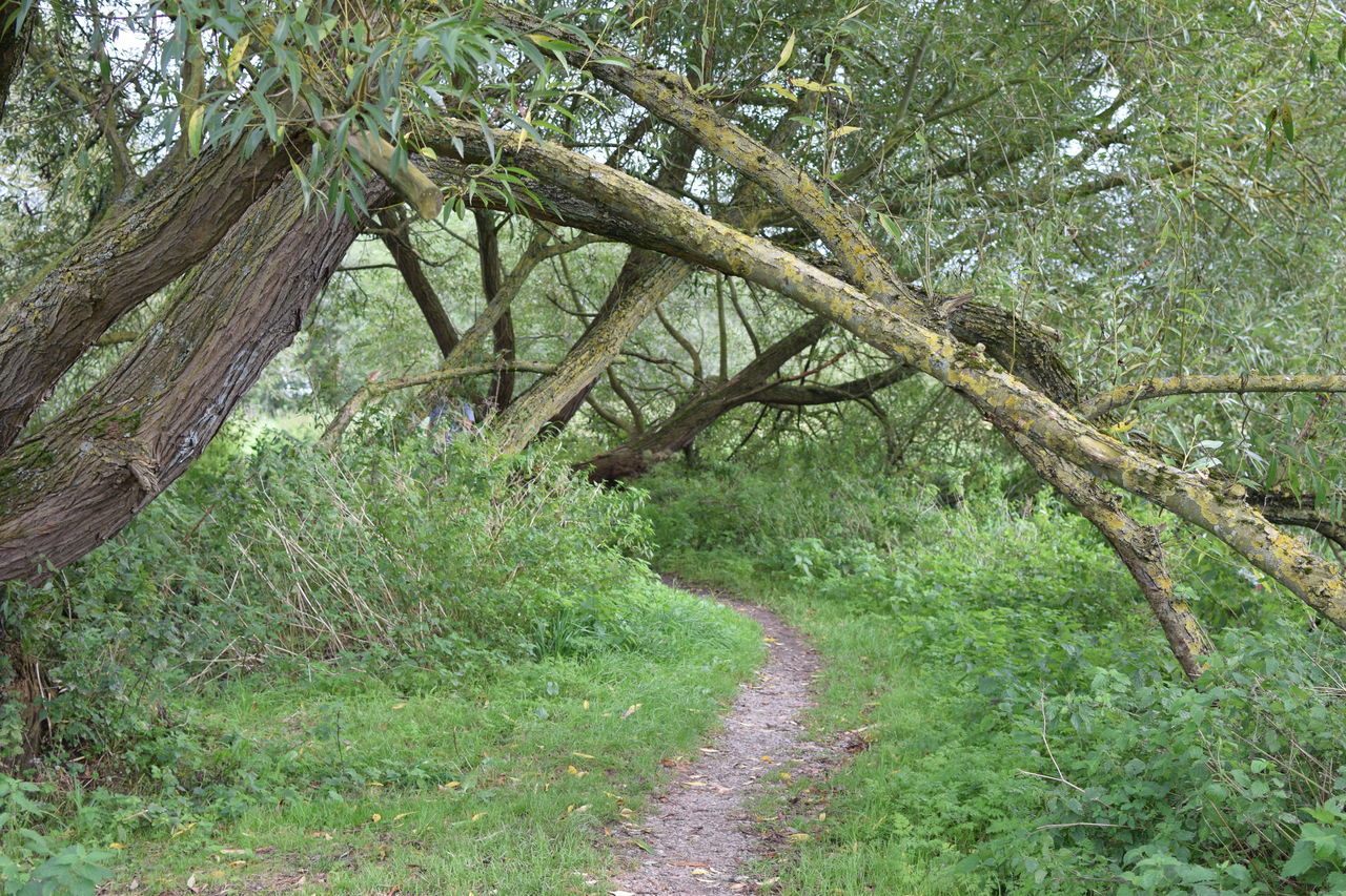 Beauty In Nature Footpath Forest Green Color Growth Lush Foliage Narrow Nature No People Non-urban Scene Tranquil Scene Tranquility Tree Tree Trunk WoodLand Woods