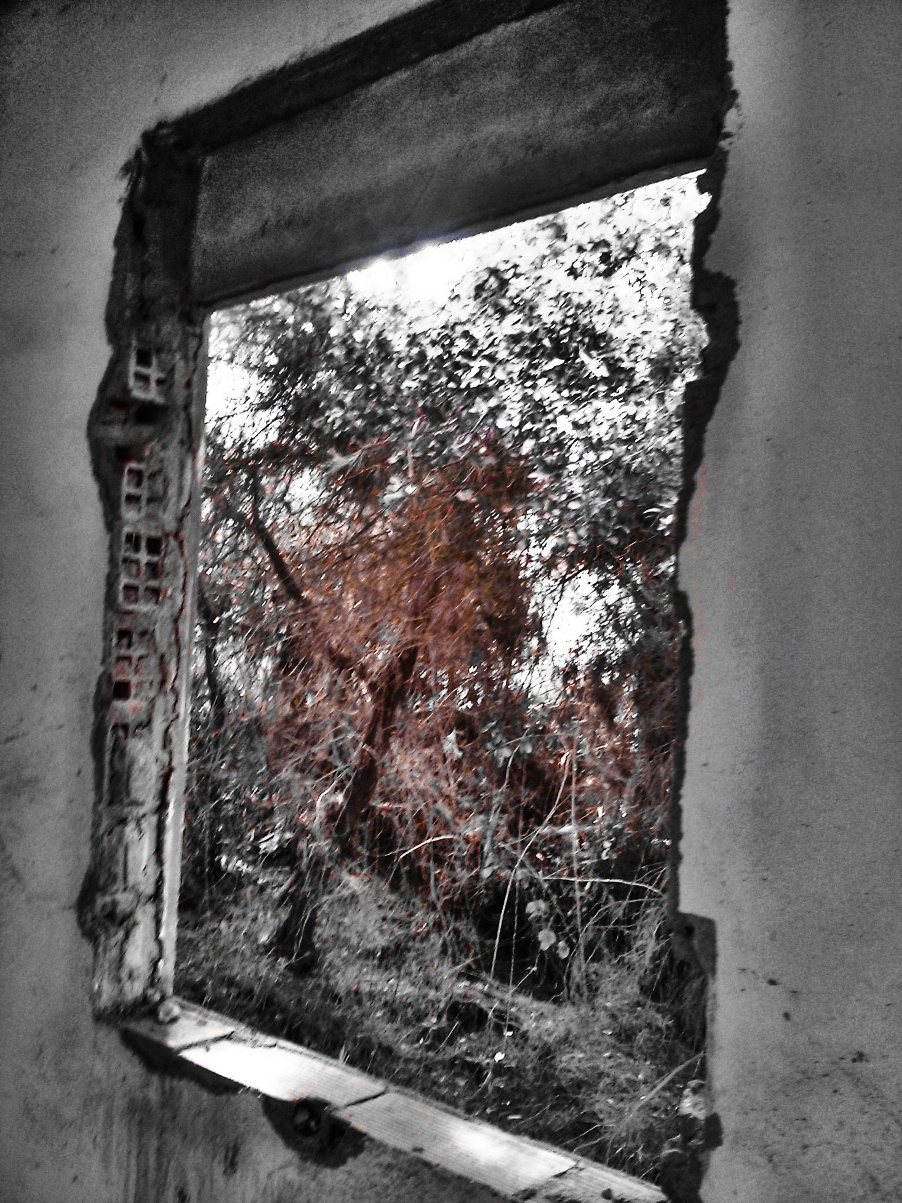 tree, wall - building feature, built structure, wall, day, growth, no people, architecture, old, nature, text, outdoors, house, window, sky, abandoned, plant, building exterior, low angle view, weathered