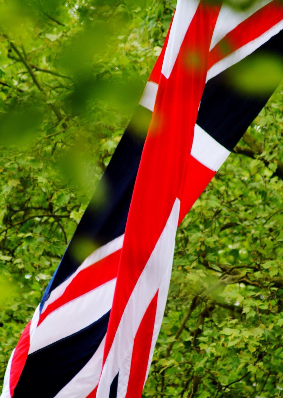 flag, red, striped, patriotism, green color, no people, growth, day, outdoors, plant, grass, close-up, nature, tree