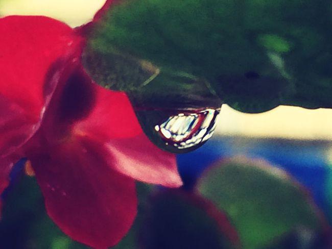 Gocce Di Pioggia After The Rain Temporaleestivo Flowers Riflessi Beauty In Nature EyeEm Gallery Rain Acquazzoni
