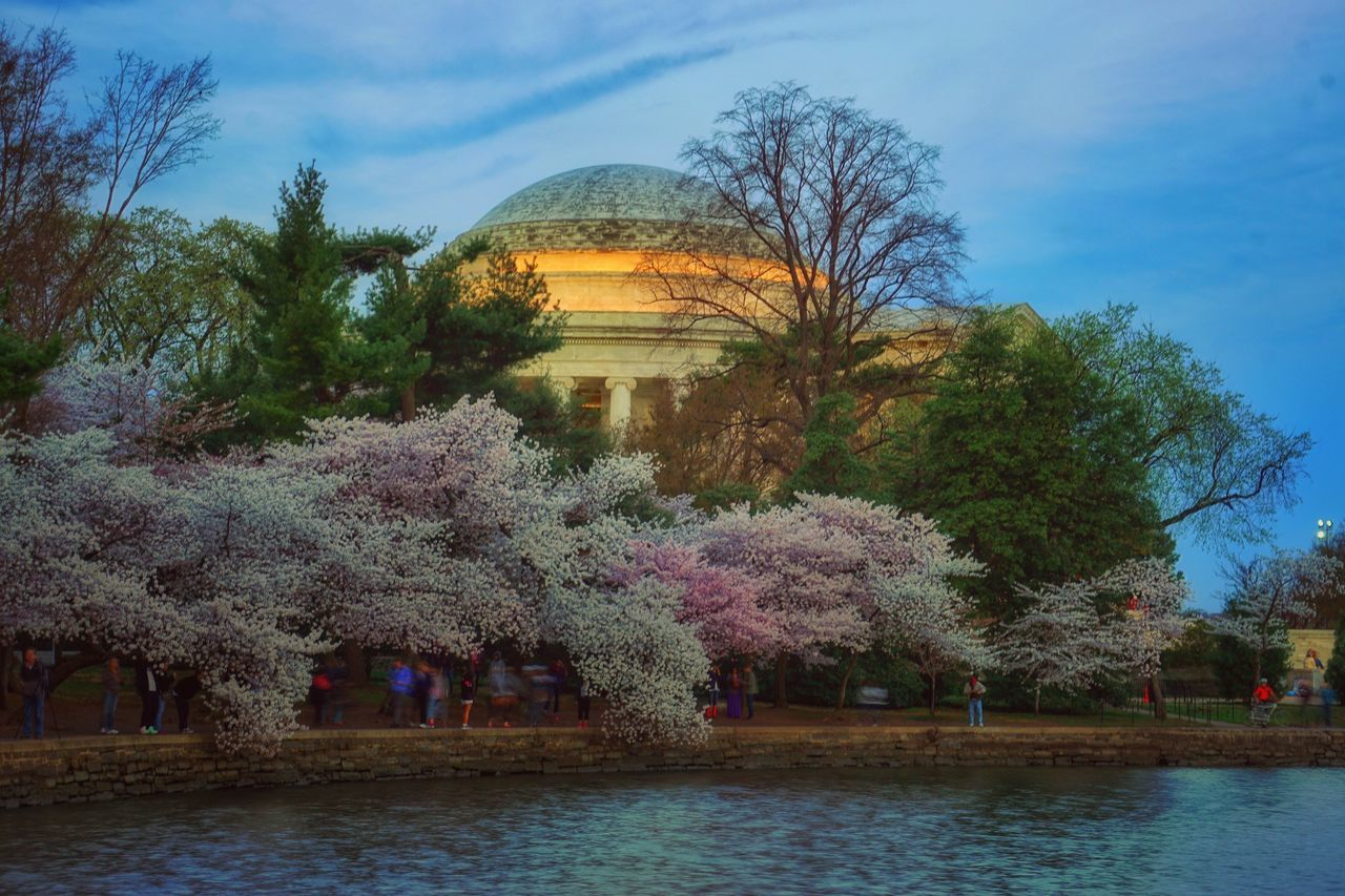 One more photo from Saturday morning before sunrise along the tidal basin Jefferson Memorial Tidal Basin Cherry Blossom Festival Cherry Blossoms Morning Early Morning Spring Spring Flowers Yoshino Washington DC