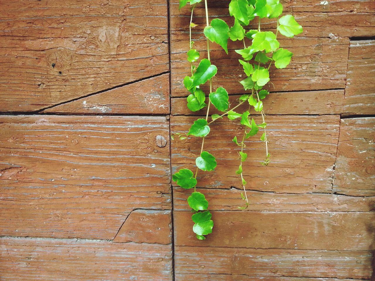 green Mint By Motorola