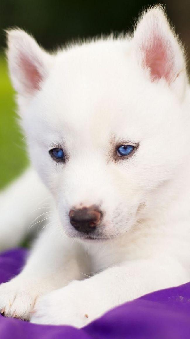 Cute dogIzmir/ Bornova EyeEm Nature Lover First Eyeem Photo Animal Animal Photography Animal_collection Cute Pets