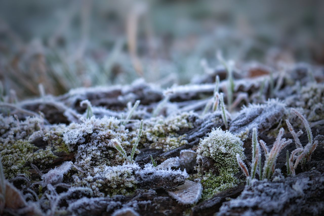 snow, nature, winter, cold temperature, no people, close-up, selective focus, day, outdoors, lichen, beauty in nature