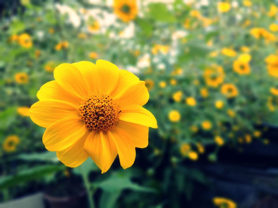 Flores del jardín Garden HDR Hdr Edit Flowers