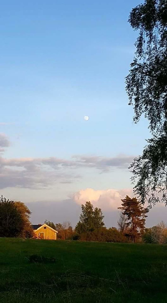 field, grass, landscape, sky, nature, beauty in nature, tree, tranquil scene, tranquility, scenics, no people, built structure, growth, architecture, outdoors, cloud - sky, building exterior, day, moon