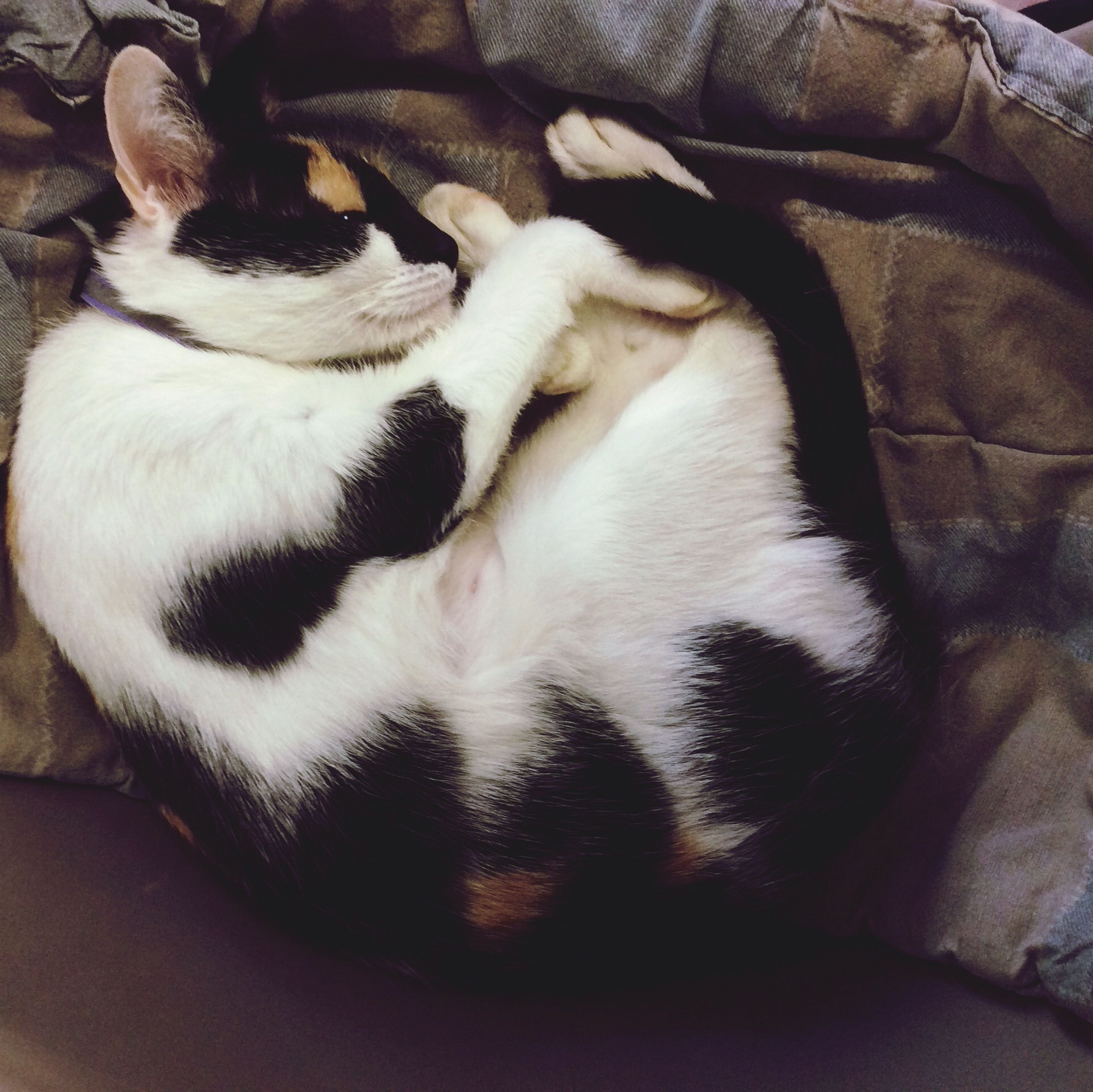 domestic animals, animal themes, pets, mammal, one animal, indoors, sleeping, relaxation, dog, resting, lying down, high angle view, bed, domestic cat, eyes closed, togetherness, cat, two animals, home interior, young animal