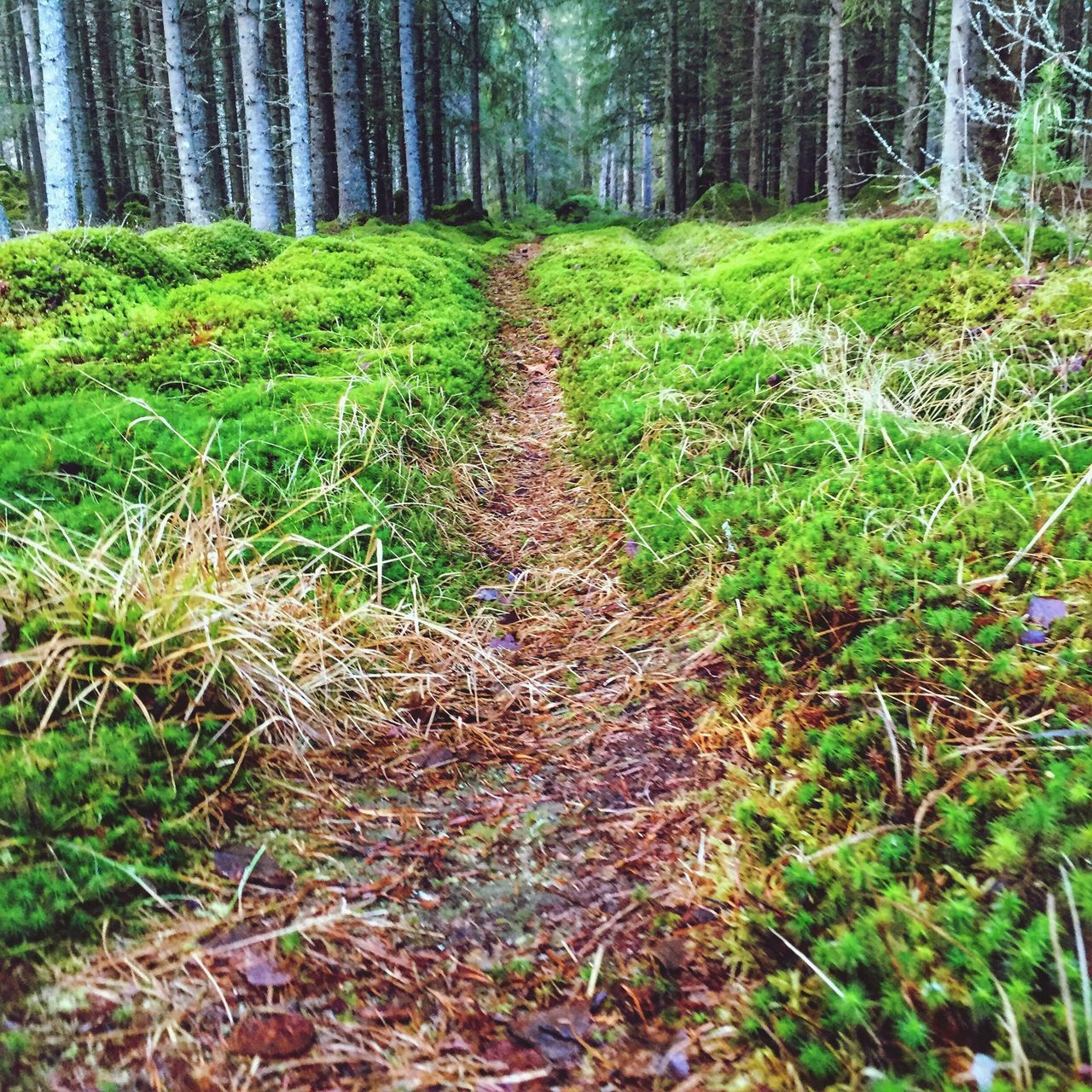 Path Footpath Forest Sweden Nature Dalarna