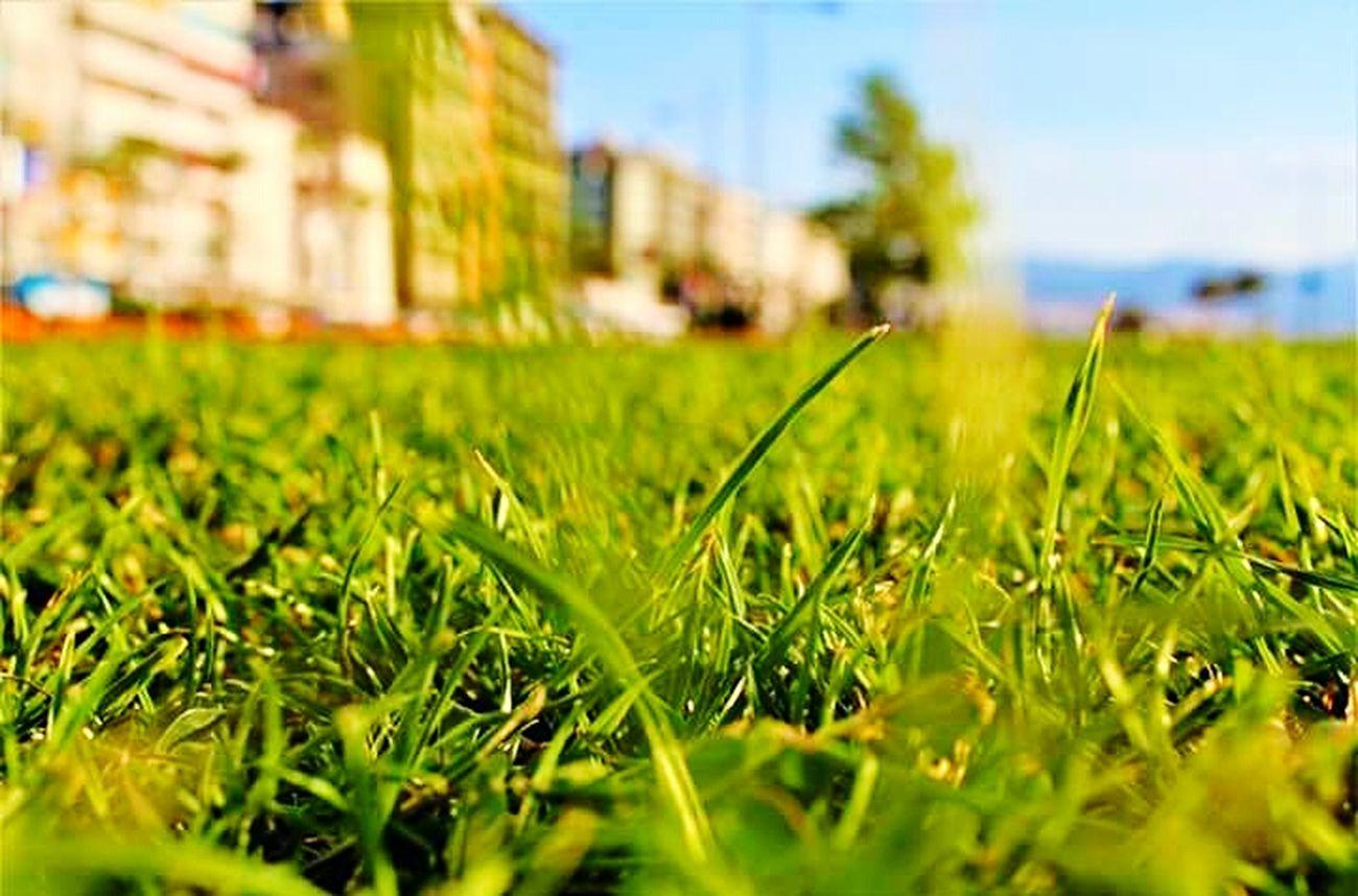Alsancak Kordon Cimler First Eyeem Photo Türkiye Firsteyeemphoto