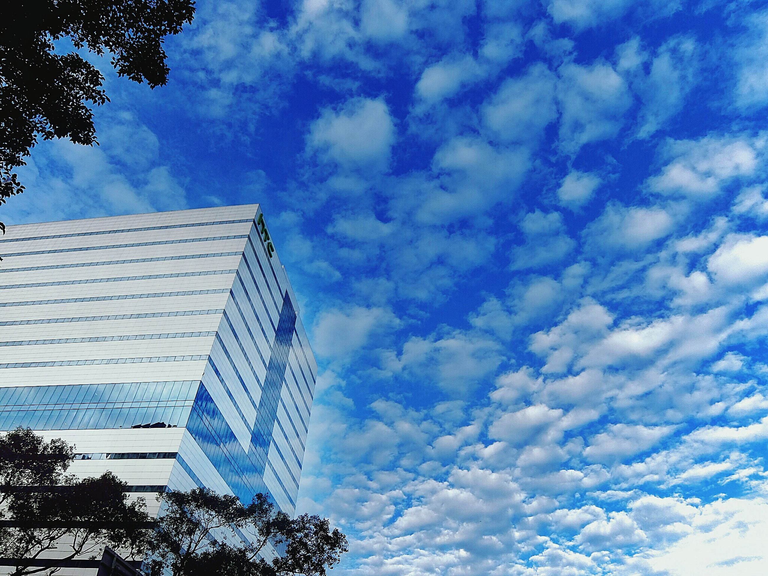 sky, low angle view, tree, blue, cloud, architecture, cloud - sky, building exterior, day, branch, growth, tall - high, outdoors, tall, cloudy, scenics, office building, beauty in nature, skyscraper, modern, majestic, high section, tranquil scene, no people, tranquility, treetop