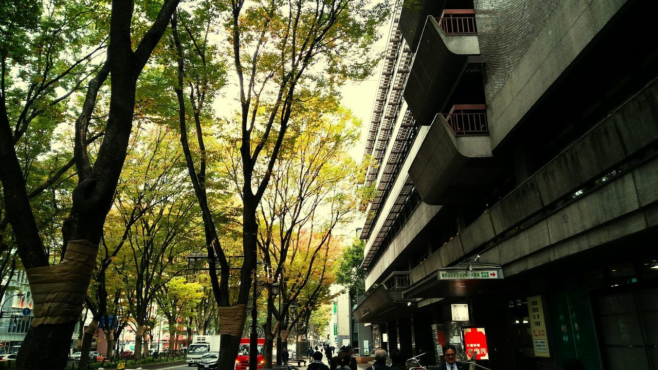 building exterior, built structure, architecture, tree, street, outdoors, city, city life, day, nature, no people, sky