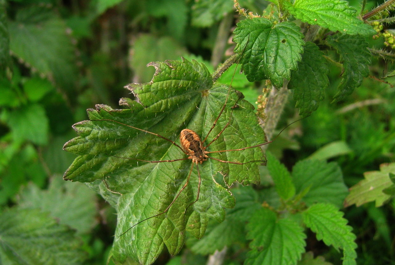 Close-up Detail Green Color Leaves Macro Nature No People One Insect Selective Focus Spider Südtirol