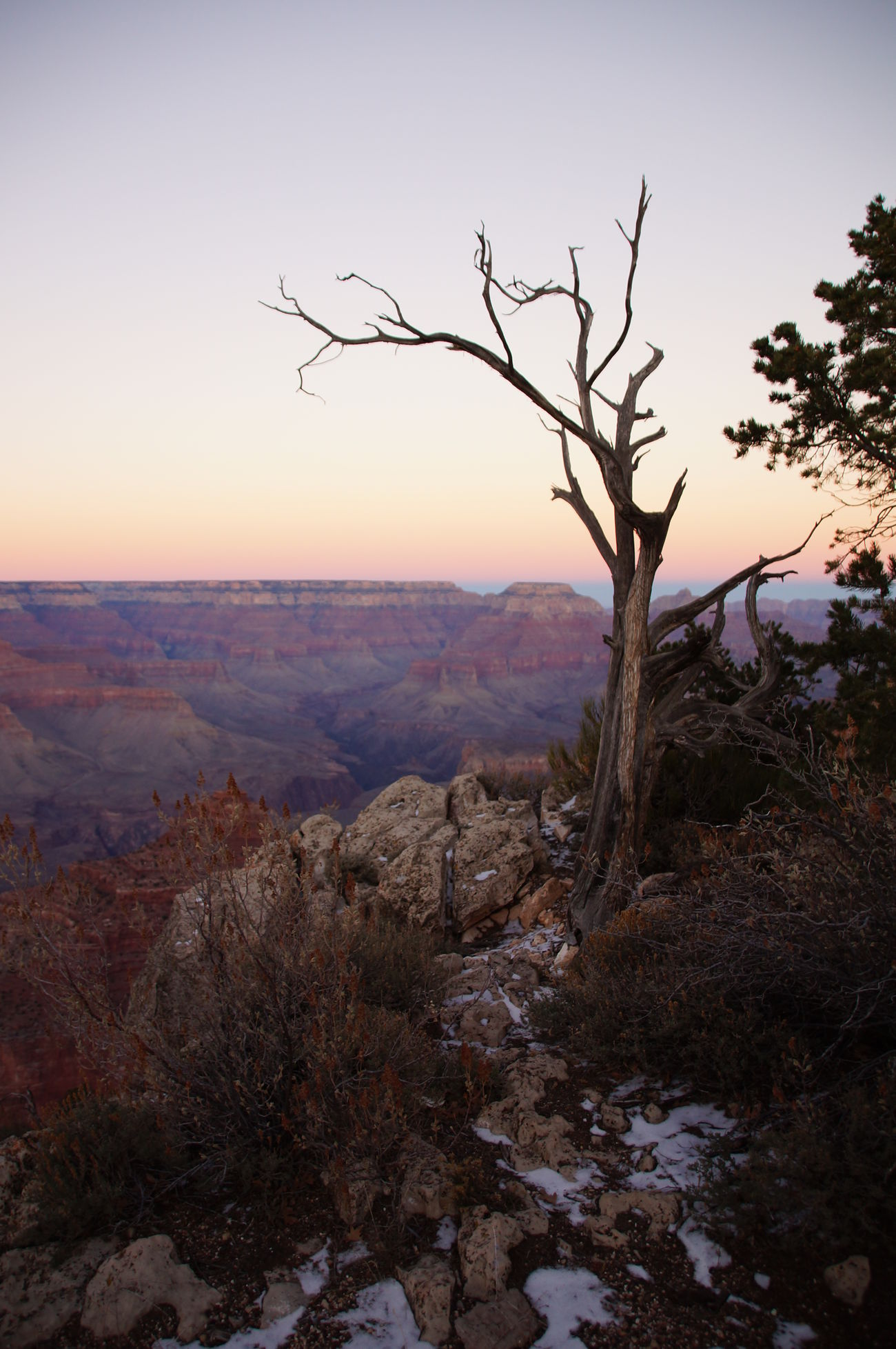 Arizona Beauty Beauty Of Decay Erosion Geography Grand Canyon Landscape Nature No People Outdoors Rock Sony A37 Sunset Tranquil Scene Tranquility Tree Zen-like