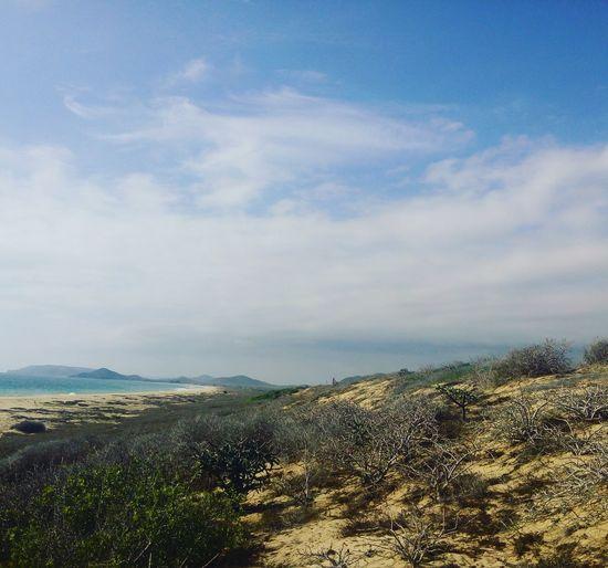 Loscerritos BajaCaliforniaSur Mexico Photography Fotografia Foto Photo Intothewild Beach Playa