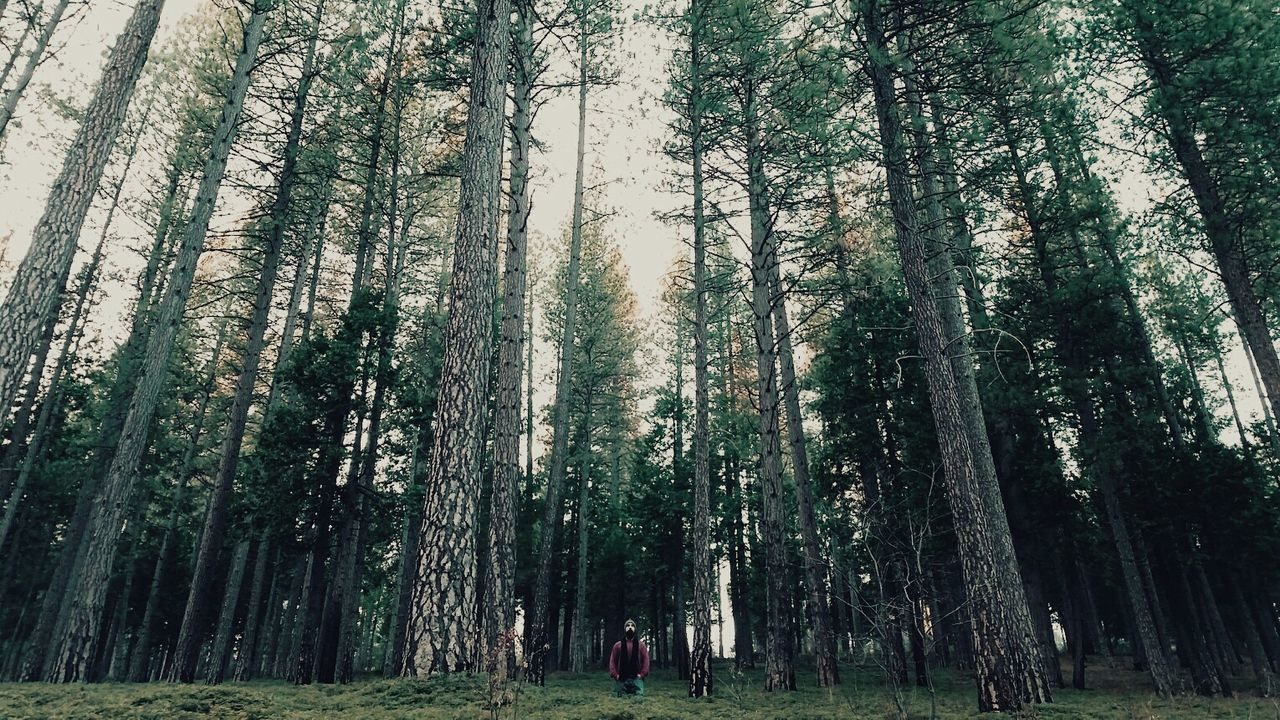 Beautiful stock photos of camping, Activity, Beauty In Nature, Branch, Casual Clothing