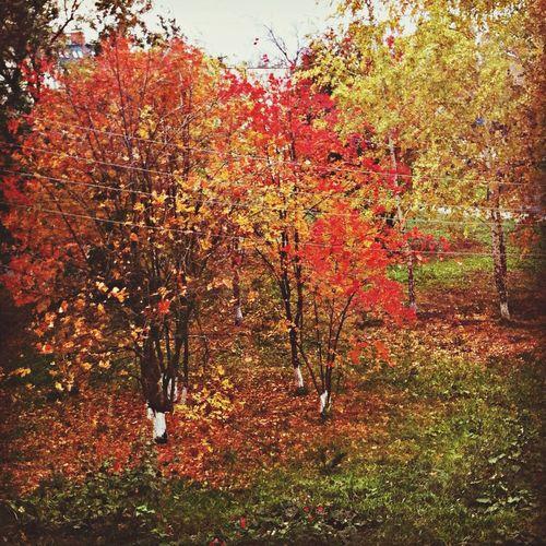 осень желтыелистья грусть